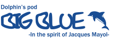 BIG BLUE|東京でフリーダイビング・スキンダイビングを安全に楽しめるスクール